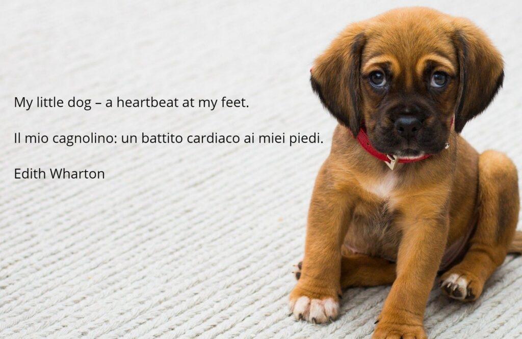 frasi sui cani in Inglese