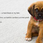 15 (Brevi) Frasi sui cani in Inglese (con traduzione)